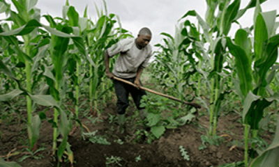Nigerian farmers seek collaboration with African counterparts