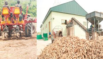Manufacturers import N291 6bn cassava syrup