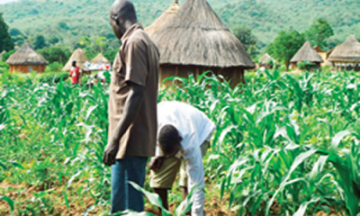 '1m farmers grow bio-fortified crops in Nigeria'