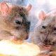 How we survived Lassa fever, by doctors