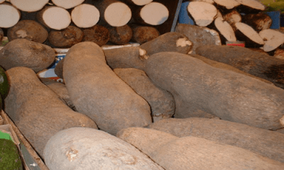 Researchers see genome sequences in white Guinea yam