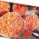 Post-harvest crisis: Tomato yield drops by 40%  –Report