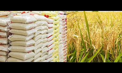 Flood: Rice farmers lose N27.5b in Sokoto – RIFAN