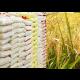 Rice farmers lauds Sasakawa Global 2000 for intervention programmes
