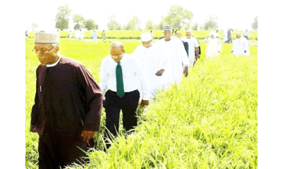 Nigeria's rice revolution: Facts, fables