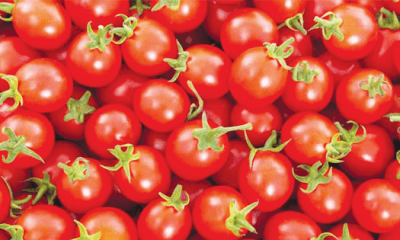 Tomato policy: All eyes on FG's monitoring team