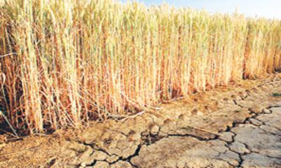 Tackling climate change challenge