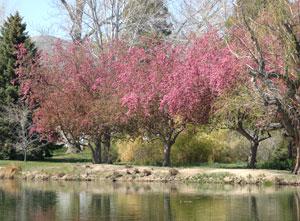 Spring at Idlewild Park in Reno, Nevada, NV