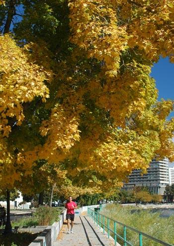 Riverwalk, fall, autumn, Truckee River, Reno, Nevada