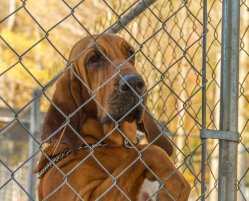 Bell County Bloodhound Arson Team Photo Shoot