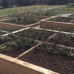 New West Community Garden Grand Opening!