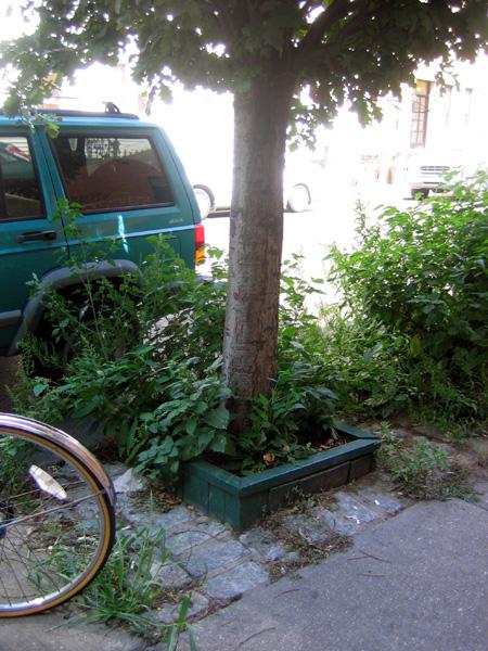 Fifth Tree Pit