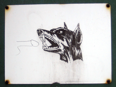 India Street Canine