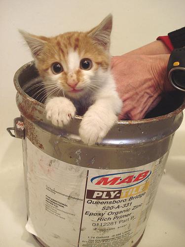 Queensboro Kitty