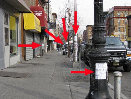 Lost Dog Fliers Manhattan Avenue
