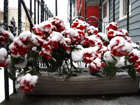 snowflowersnys