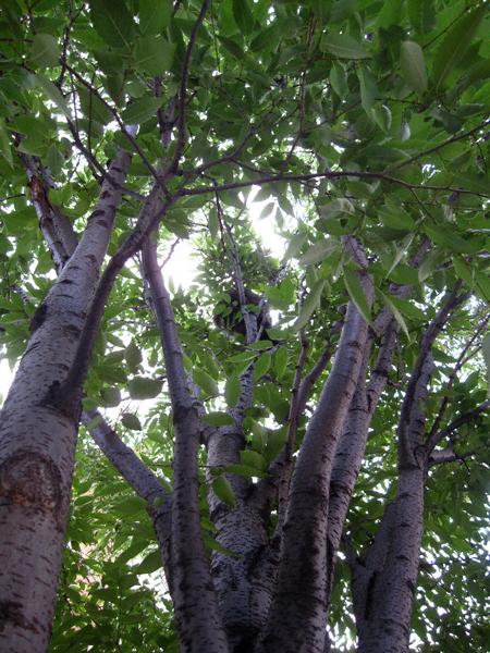 whatsinthetree