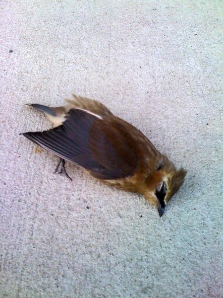 deadbird2