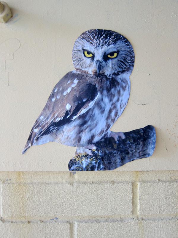 Southside Street Art Du Jour Owl Newyorkshitty Com