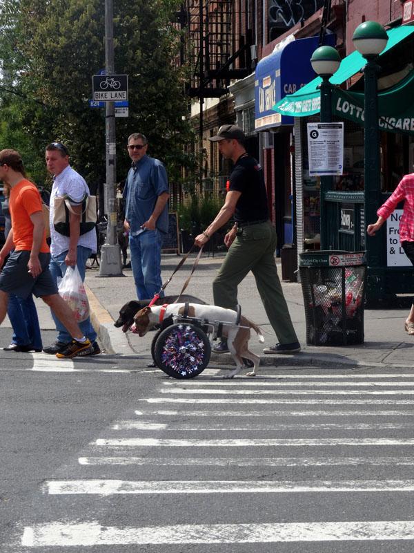 Mobility On Manhattan Avenue nys