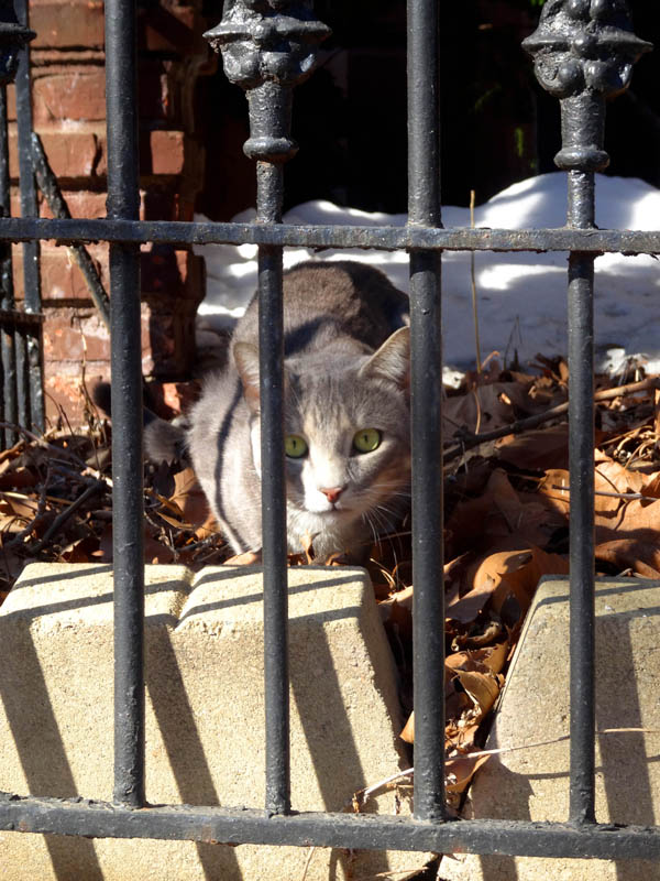 Quincy Street Cat 2 nys