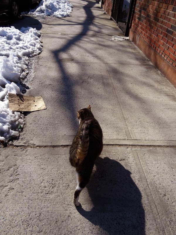 Quincy Street Cat 3 Struttin nys