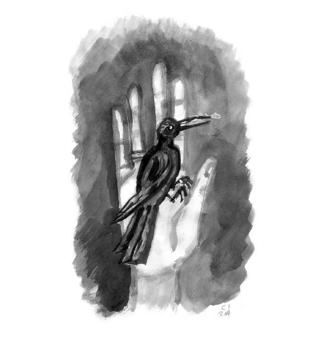 Un colibrí en casa