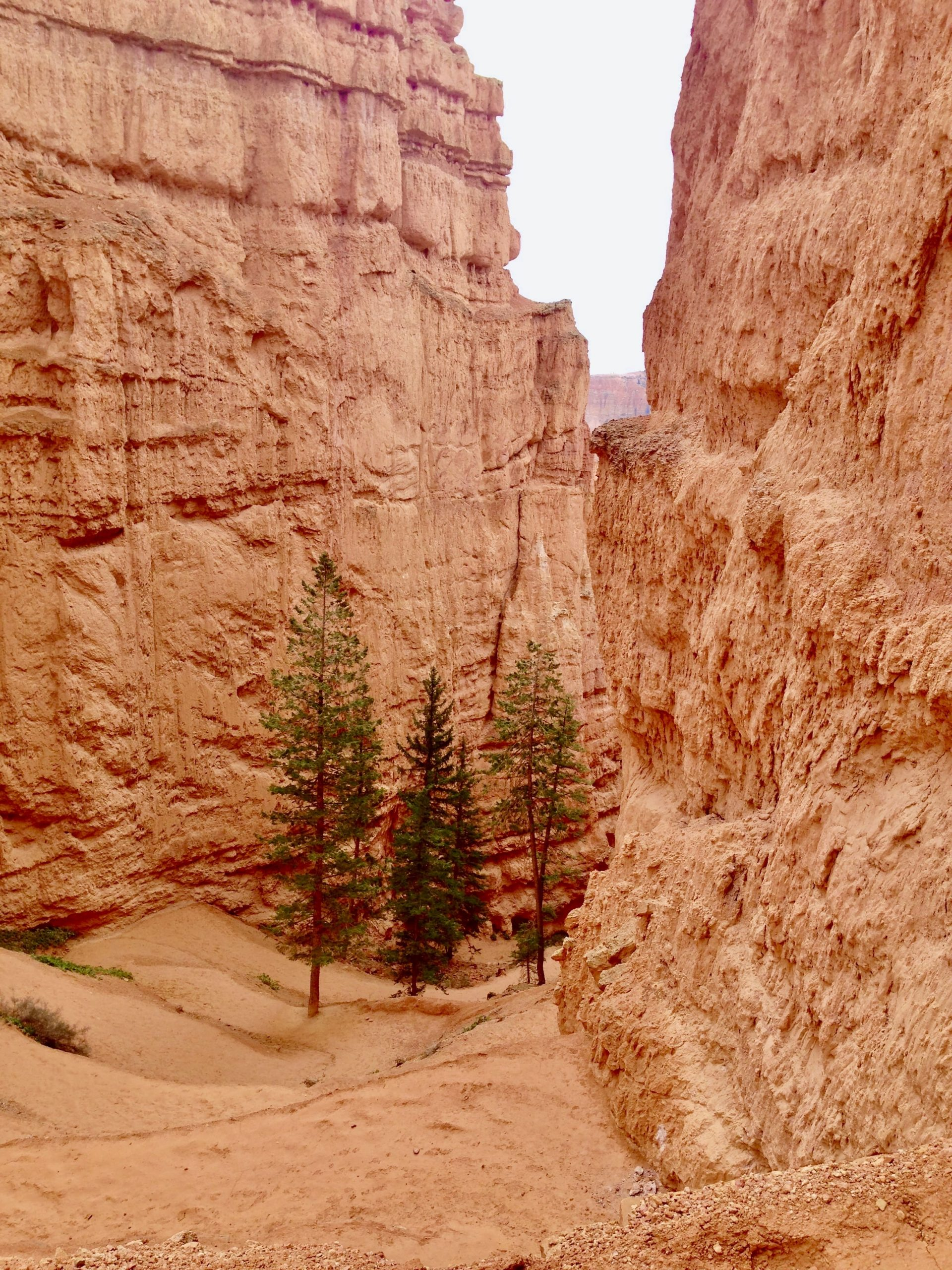 Figure 8 Trail in Bryce Canyon National Park