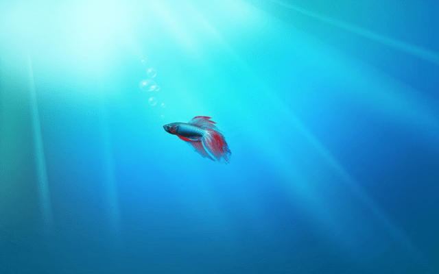 the story of windows 7 beta fish next of windows