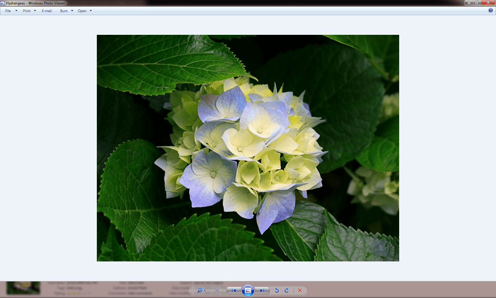 How To Fix Windows Photo Viewer Displaying Yellow Or Orange Tint