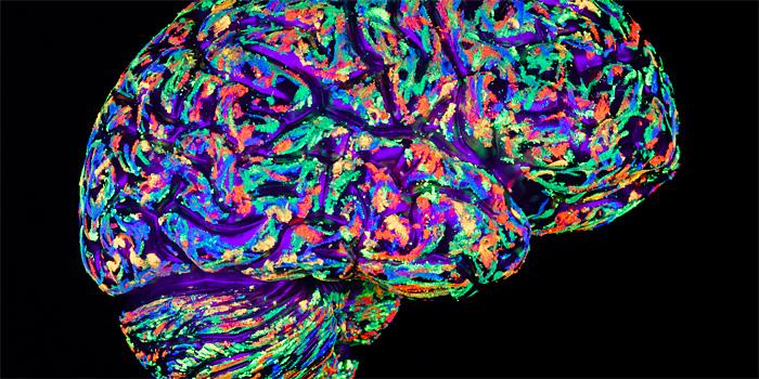 Три новых факта из жизни мозга