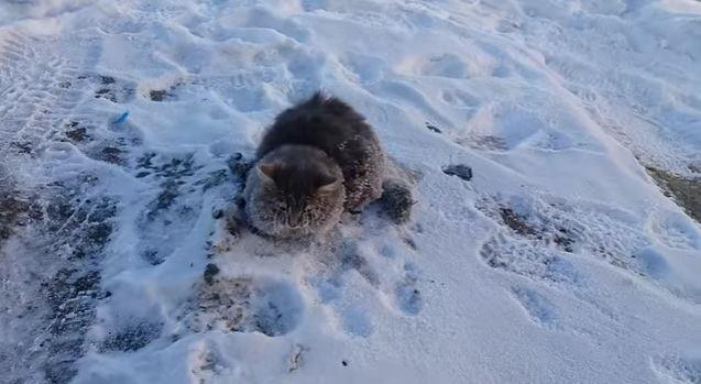 แมวที่เผลอหลับไปในวันที่มีอากาศหนาว