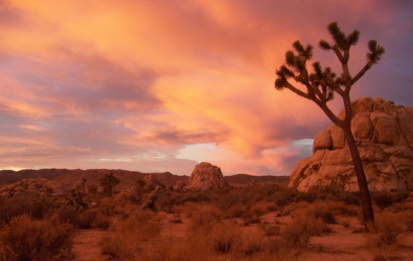 Joshua_Tree_NP_-_Sunrise