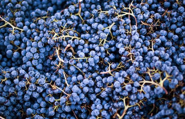 cabernet-grapes