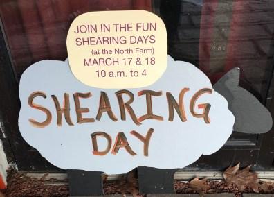 nezinscot farm shearing days