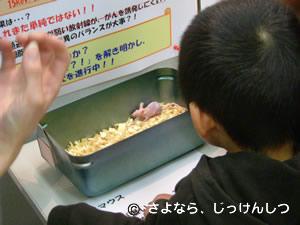 放医研マウスふれあい7