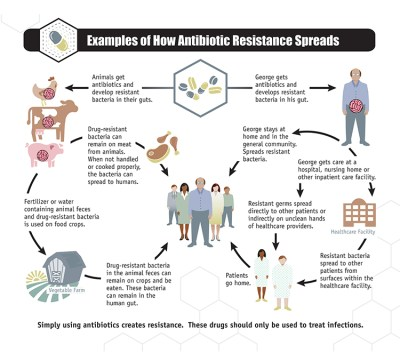 How antibiotic resistance spreads