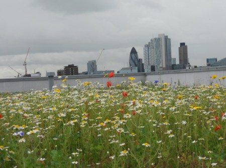 City Roofs Seeded Wild Flower Roof