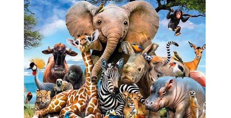 Resultado de imagen para dia mundial de los animales