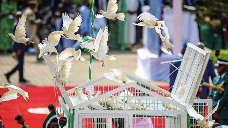 Presidency explains why pigeons released by Buhari refused to fly