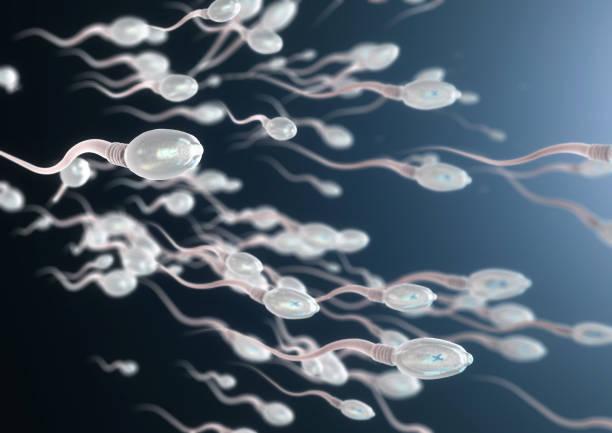 Sperm Photo