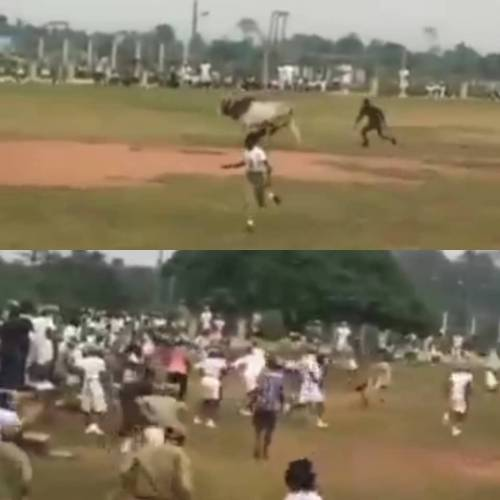 People Run Helter-skelter As Cow Disrupts Parade Competition At National Youth Corps' Camp In Ogun