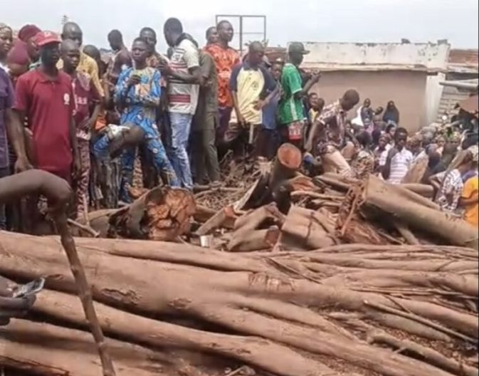 Tree fall and rise in Oyo