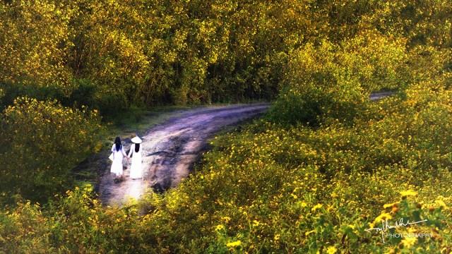 Đi giữa rừng hoa dã quỳ