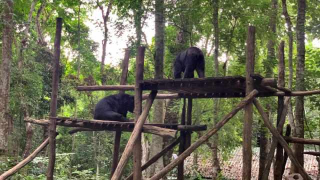 Khu bảo tồn gấu ở thác Kuang Si