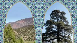 Ausstellung Marokkos Wälder entdecken (pkt-e.de)