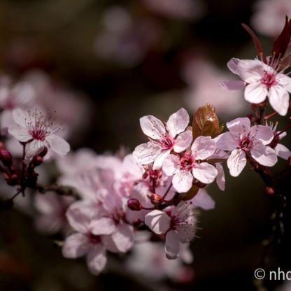 Frühlingsgruß - 3