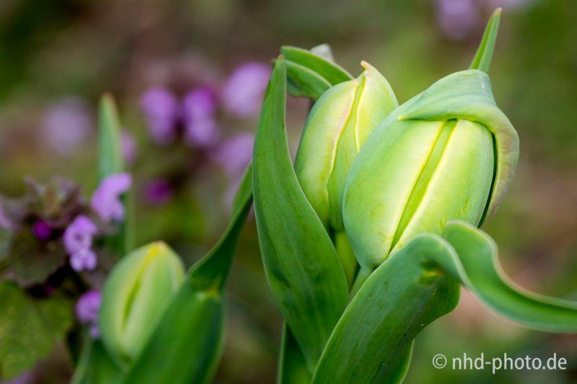 Frühlingsgruß - 8