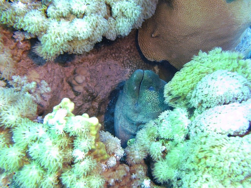 Dive the Red Sea in January - Moray