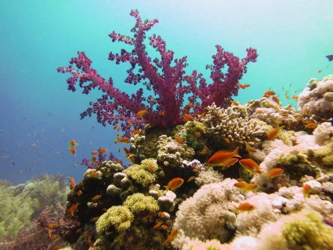 Dive the red Sea in January - Reef